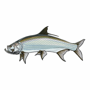 Casey Underwood Tarpon Sticker