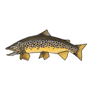 Casey Underwood Brown Trout