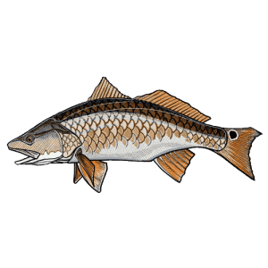 Casey Underwood Redfish Sticker