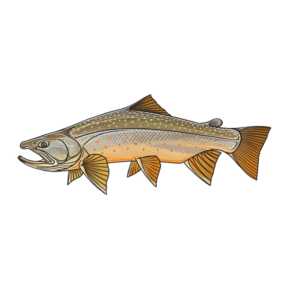 Casey Underwood Bull Trout Sticker